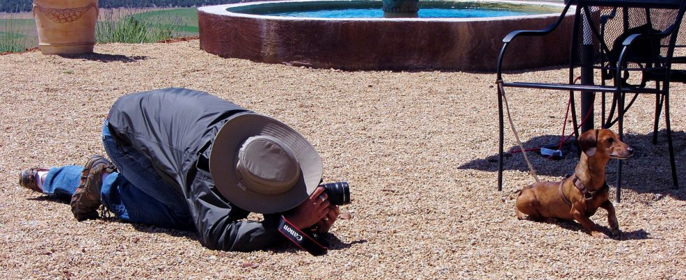 Huisdieren fotograaf